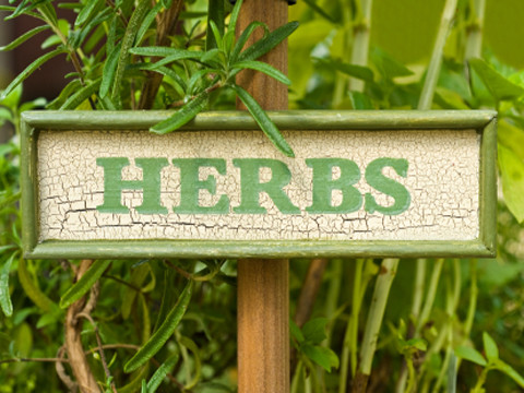 Learn to Grow Your Own Herbs!